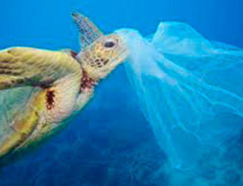 Bolsas plásticas en todos lados ¿porqué es un problema?