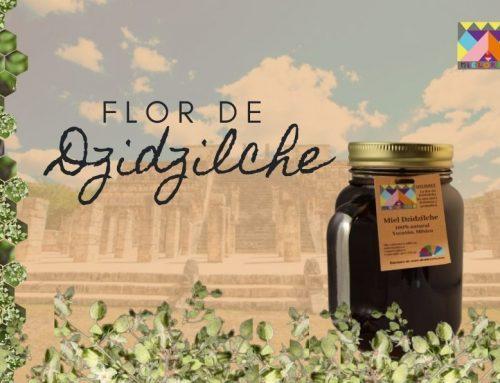 Flor de Dzidzilché, un dulce regalo